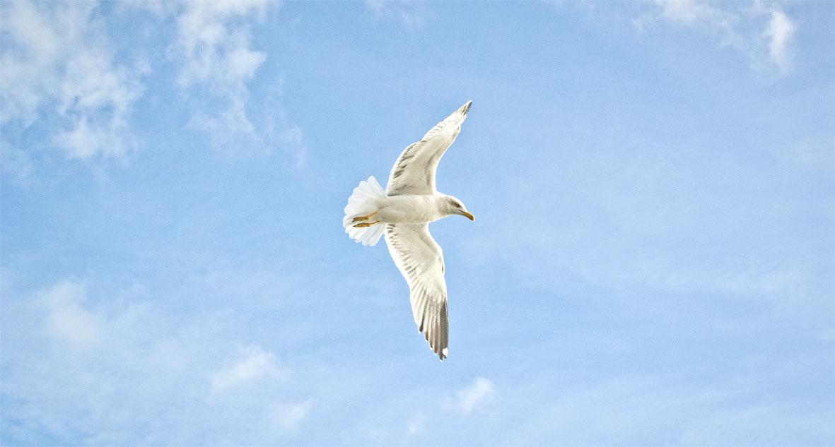 Lisbon seagull | chestnutandsage.de