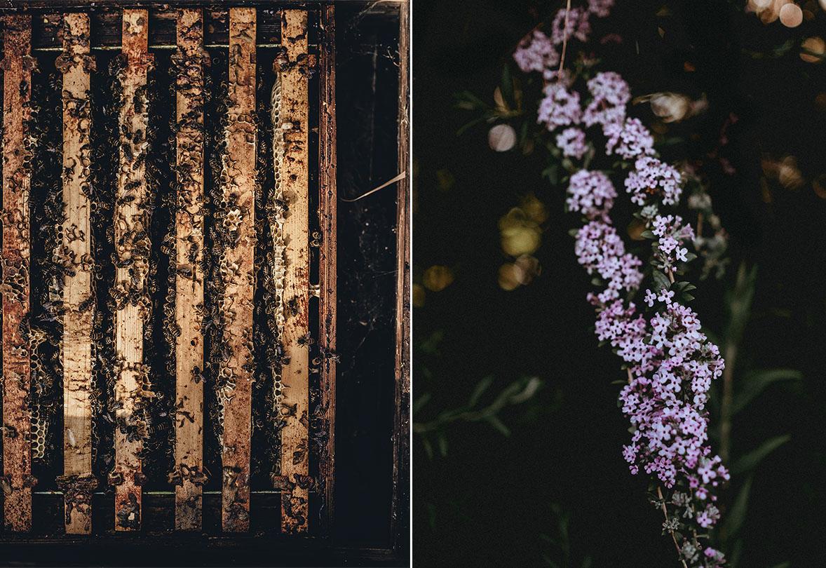 Annie Spratt | unsplash.com | Bees