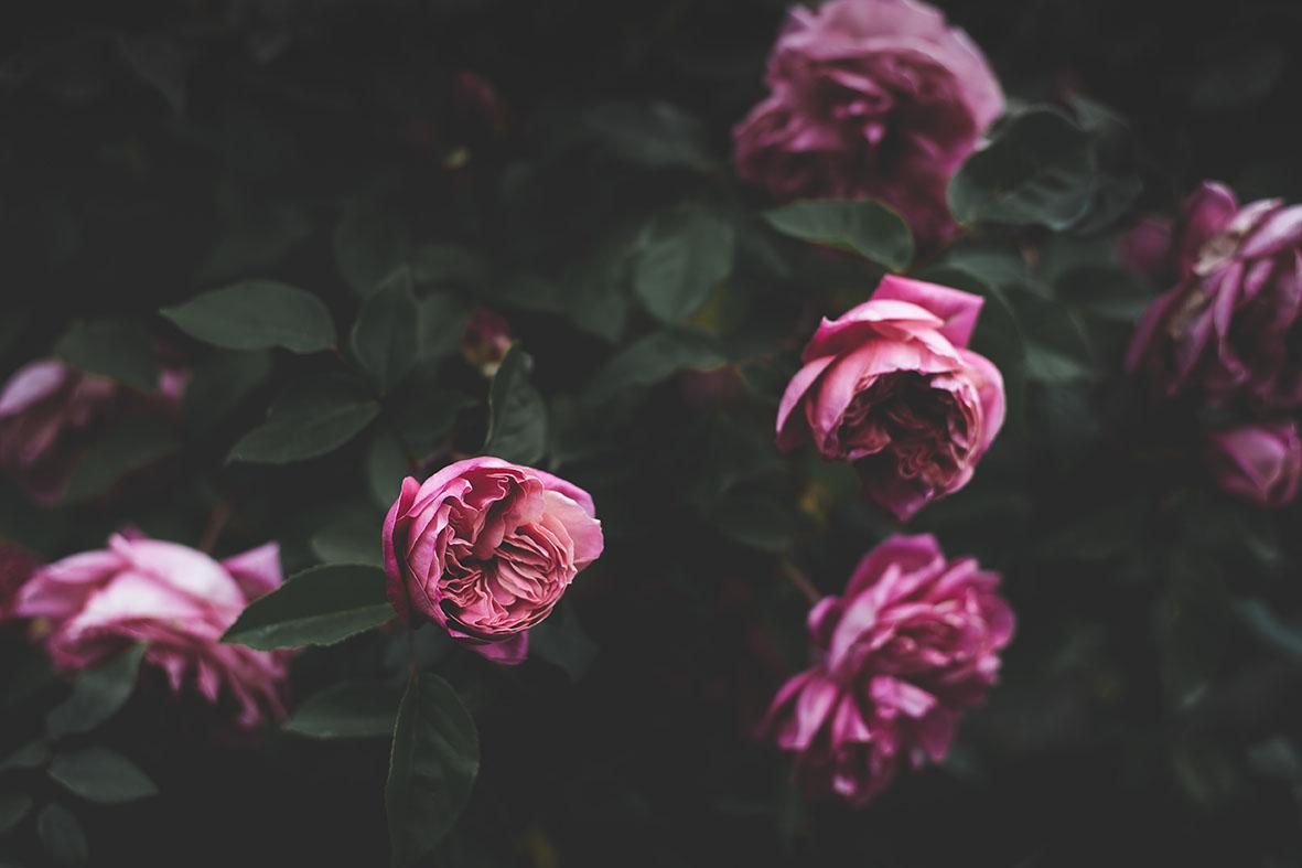 Annie Spratt | unsplash.com